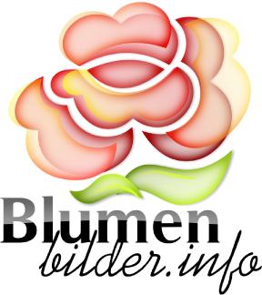Blumenbilder.info